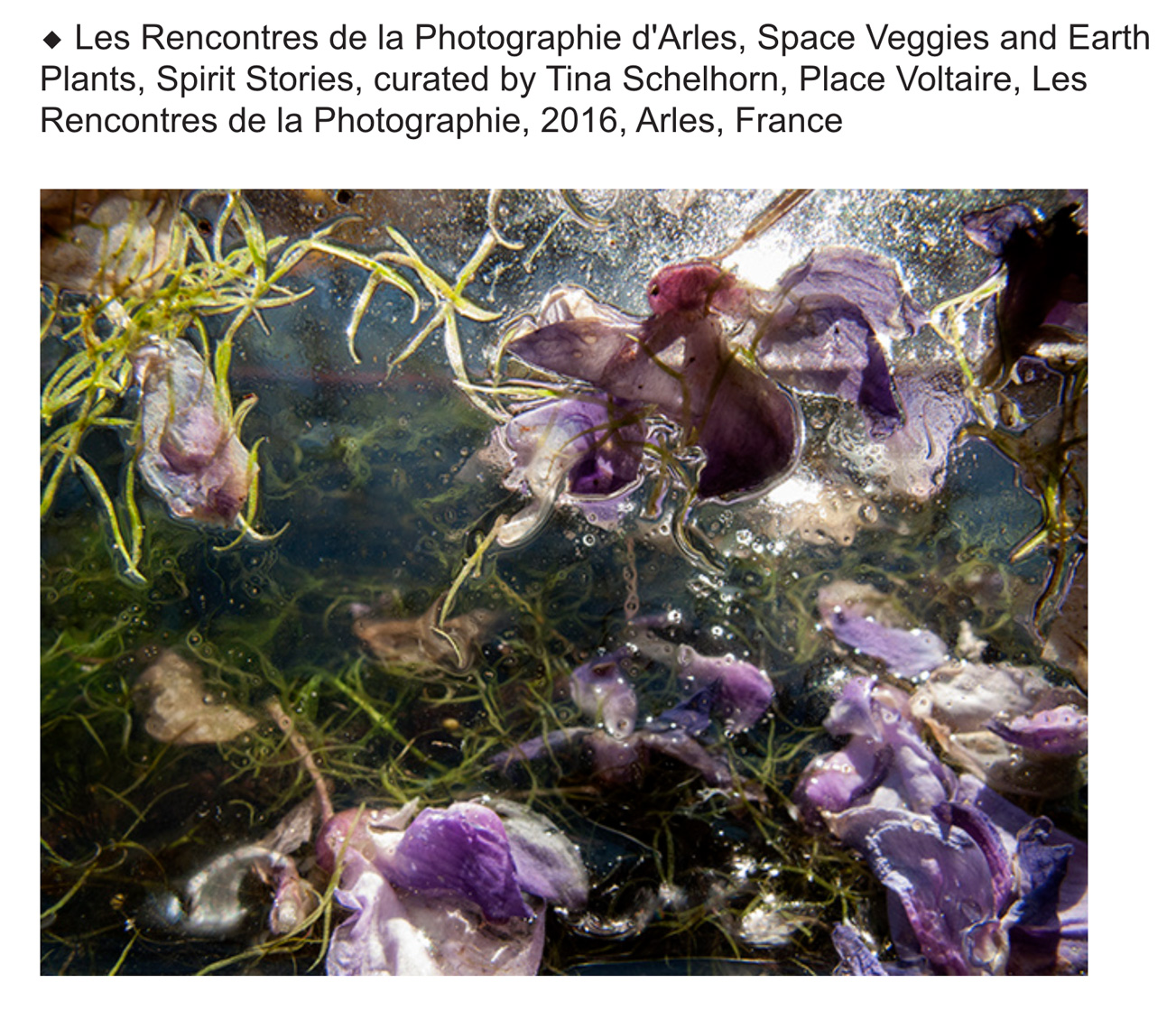Les Rencontres de la Photographie d'Arles, Space Veggies and Earth Plants, Spirit Stories, curated by Tina Schelhorn, Place Voltaire, Arles, France